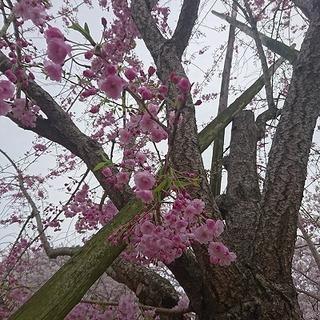17-04-11-14-18-03-172_deco.jpg
